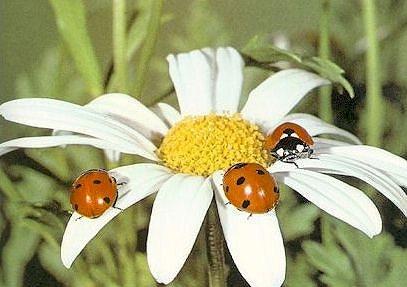 Тест насекомые
