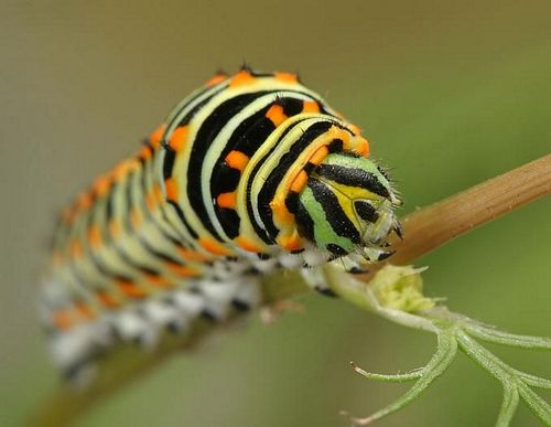 Какие насекомые используются для